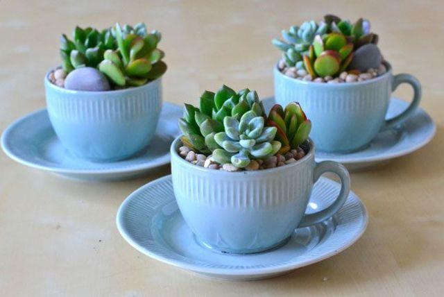 teacup succulent garden: