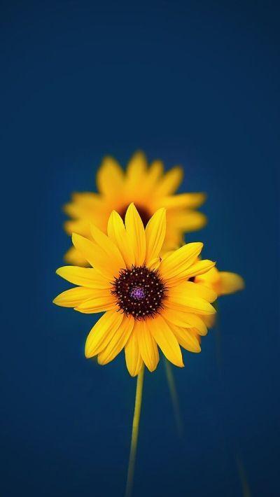 Best 25+ Iphone Wallpaper Yellow ideas on Pinterest   Dark phone wallpapers, Screensaver and ...
