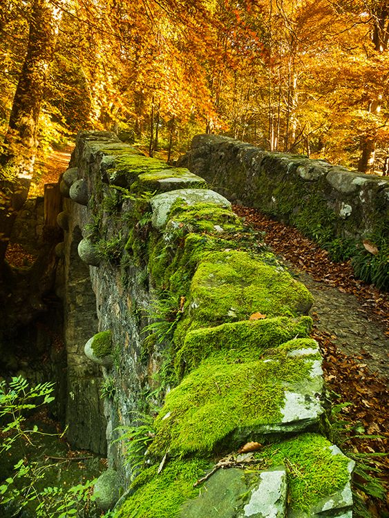 Looking across Foley's Bridge that spans the Shimna River to the various colours that autumn has to offer us at this time of the year in Tollymore Forest Park, Newcastle, County Down.: