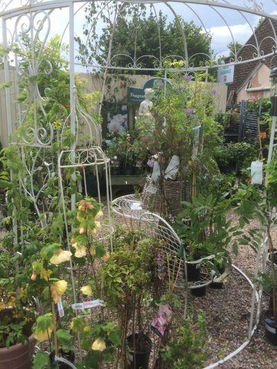 17 Best images about Matlock Garden Centre (Blue Diamond ...