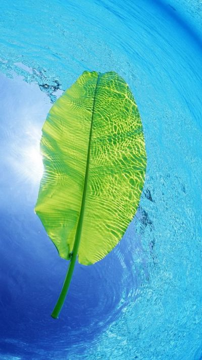 Blue Water Green Leaf iPhone 6 Wallpaper | iPhone Wallpapers | Pinterest | Wallpaper and Leaves