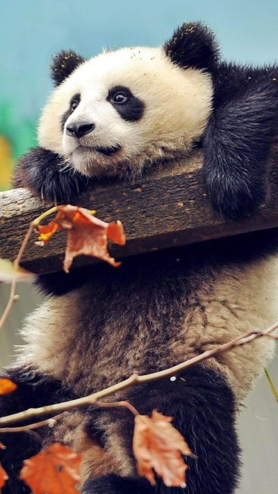 Best 24 Animal Wallpaper for iPhone images on Pinterest | Other