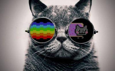 1169 best images about Cats Katz & Caaats on Pinterest