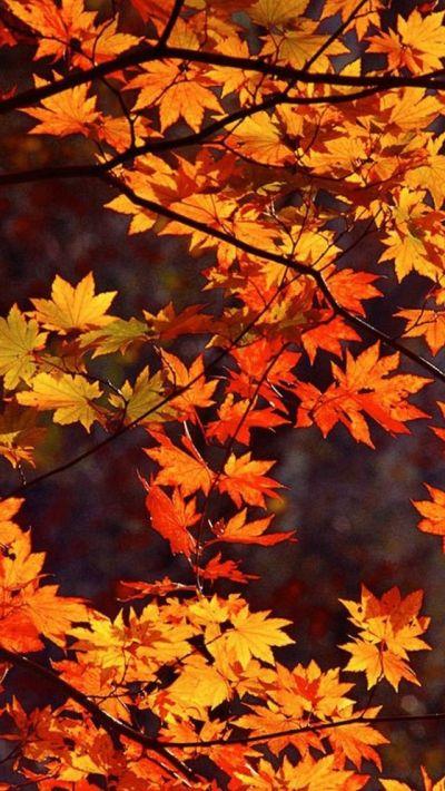 Autumn wallpaper | Halloween Cell Phone Wallpaper ...