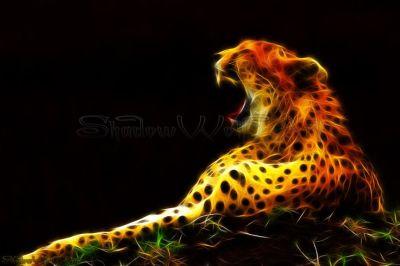 1000+ ideas about Cheetah Wallpaper on Pinterest | Leopards, Big Cats and Big Cats Art