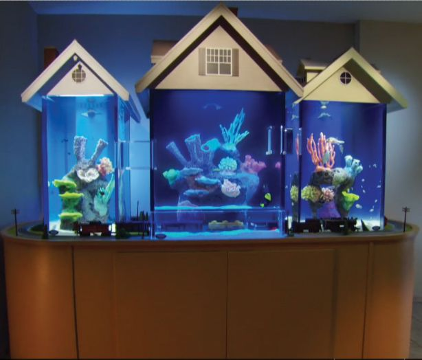 Aquarium Fish Houses Aquariums Different Types Of