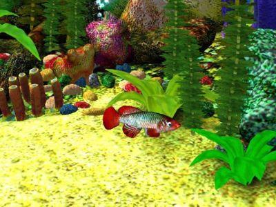 25+ best ideas about Aquarium screensaver on Pinterest | Fish screensaver, Moving screensavers ...