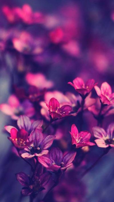 Purple wildflowers #iPhone #5s #Wallpaper   http://www.ilikewallpaper.net/iphone-5-wallpaper ...