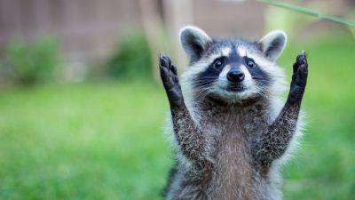 Animal: Full HD 1080p Animals Wallpapers Desktop Backgrounds HD | Animals | Pinterest | Animal ...