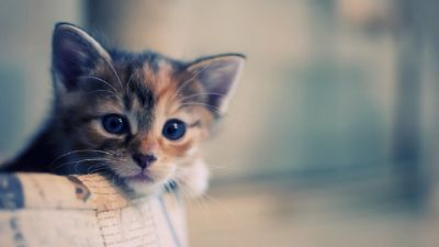 funny pictures Funny Cats Wallpapers HD Wallpapers Fan   HD Wallpapers   Pinterest   Cat ...