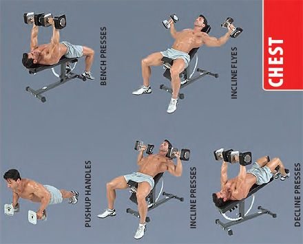 Good Chest Workouts With Dumbbells Yourviewsite Co
