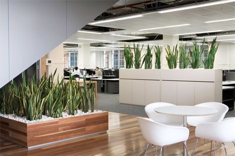 1000 Images About Office Greenery On Pinterest  Manzanita Honeycomb Shelves And Artificial Plants