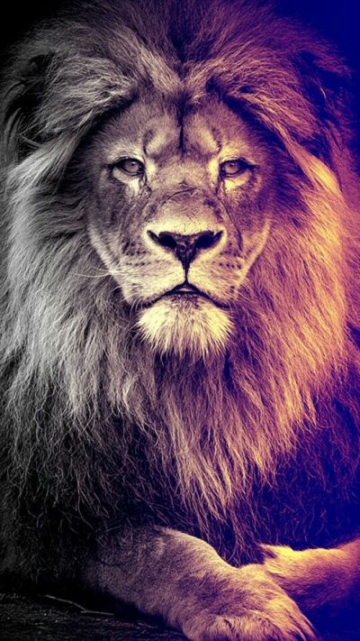 Best 25+ Lion wallpaper ideas on Pinterest | Lion ...