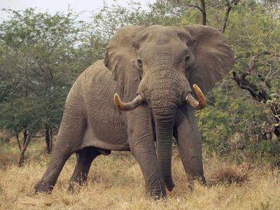 cool elephant photos | Free Desktop Elephants Wallpapers: Cool Elephants Wallpapers new ...