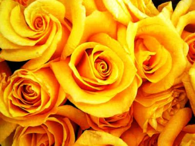 Flowers Yellow Roses Bouquet | Desktop nexus best wall | Pinterest | Yellow roses, Flowers and ...