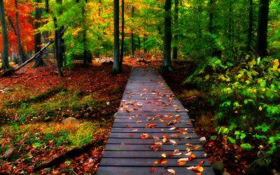Hd Nature Wallpaper Photo for HD Wallpaper Desktop 2560x1600 px 2.35 MB | Природа | Pinterest ...