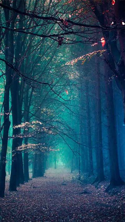 Blue Forest. 15+ Beautiful Scenery Photography iPhone Wallpapers. Tap to see all! - @mobile9 ...