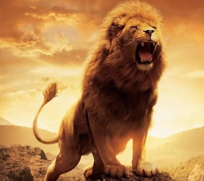 HD Lions Wallpapers and Photos HD Animals Wallpapers | HD Wallpapers | Pinterest | Lion ...