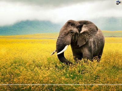 Elephant HD Wallpaper Download Images #1566 Wallpaper | animaljetz.com | Latest Nail Art Designs ...