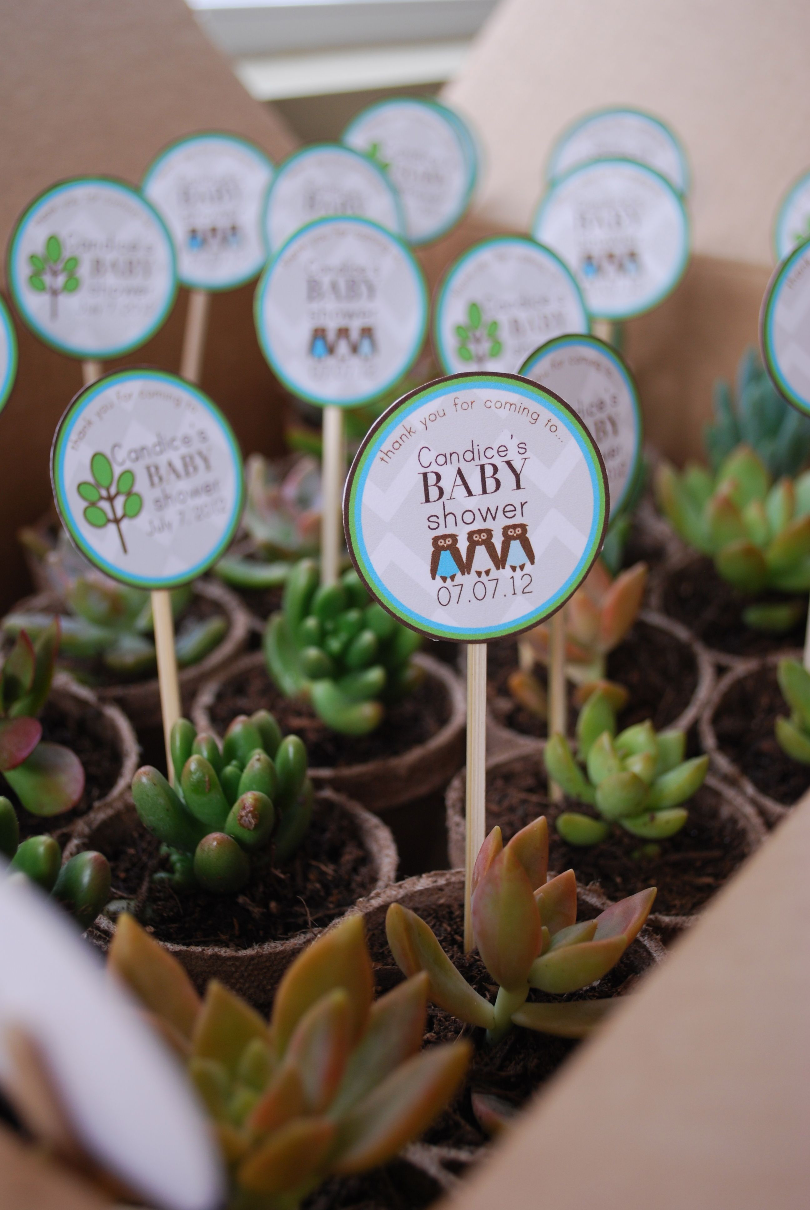 succulent wedding favors A succulent shower favor These favors were SO cute and so simple to put together