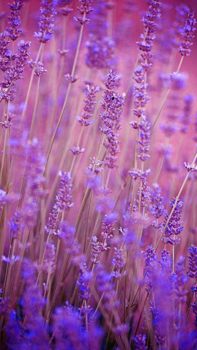 Nature wallpaper iPhone flowers purple | Nature wallpapers iPhone | Pinterest | Nature wallpaper ...