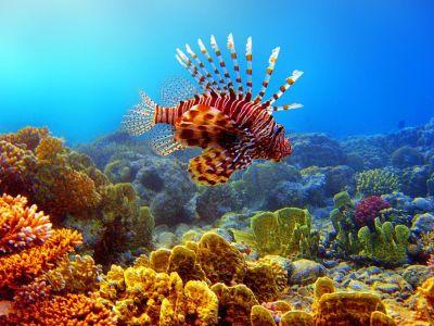Ägypten Unterwasserwelt im Ägypten Reiseführer http://www.abenteurer.net/2362-aegypten ...