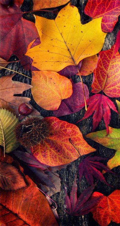 iPhone Wall: Thanksgiving tjn | iPhone Walls: Thanksgiving | Pinterest | Thanksgiving, Walls and ...