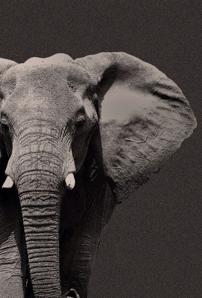 TAP AND GET THE FREE APP! Animals Unicolor Elephant Stylish Cool Wild Gray HD iPhone 6 Wallpaper ...