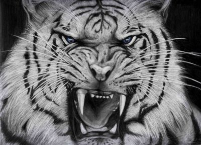 Cool White Tigers wallpaper background   Animals   Pinterest   Tiger wallpaper, Wallpaper and ...