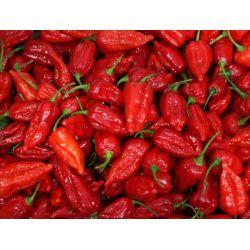 Small Crop Of Carolina Reaper Pepper For Sale