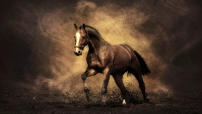 Horse Wallpapers | Best Wallpapers