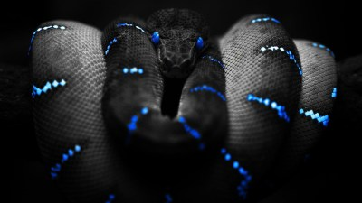 Snake Wallpapers | Best Wallpapers