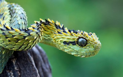 Snake Wallpapers | Best Wallpapers