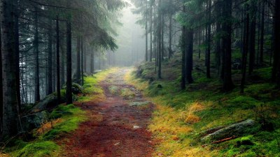 Nature Wallpapers | Best Wallpapers