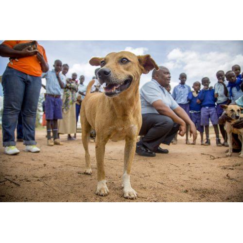 Medium Crop Of How Often Do Dogs Need Rabies Shots