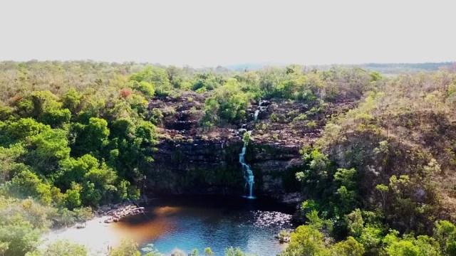 Cerrado é a vegetação mais antiga do planeta (Foto: BBC)