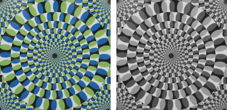 Colour versus grey-scale circle optical illusion