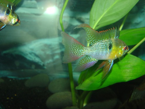fish for beginners it can become confusing visiting the pet store to