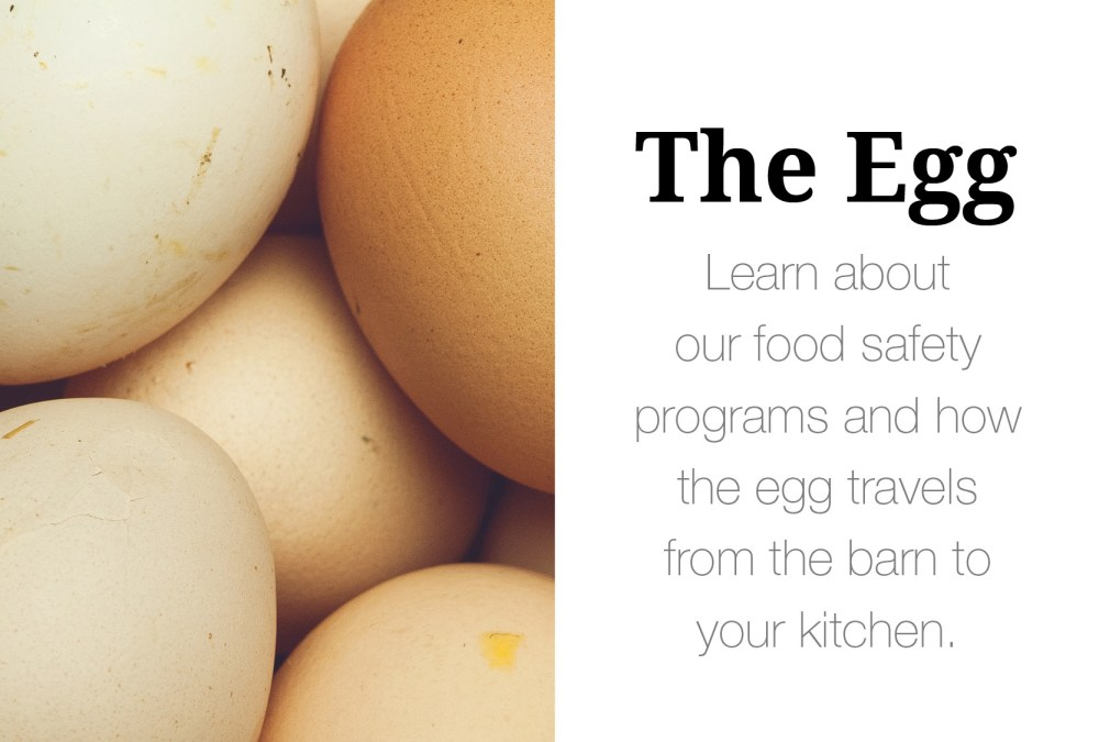 WEB_Banner_TheEggs_New