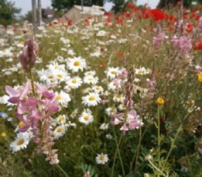 Vue de la praire fleurie