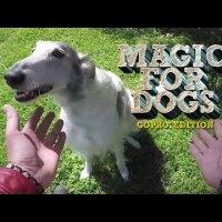 犬にエサが消えるマジックを披露した結果