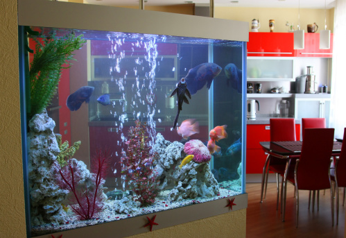 Best Way to Clean a Fish Tank | Cleanipedia