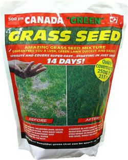 Small Of Canada Green Grass