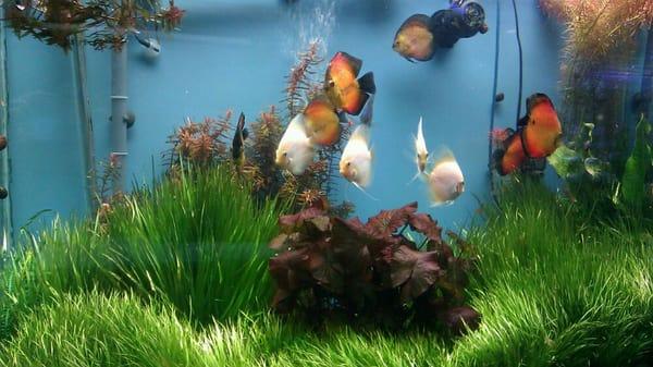 Tropic Isle Aquarium   Pet Stores   Framingham, MA   Yelp