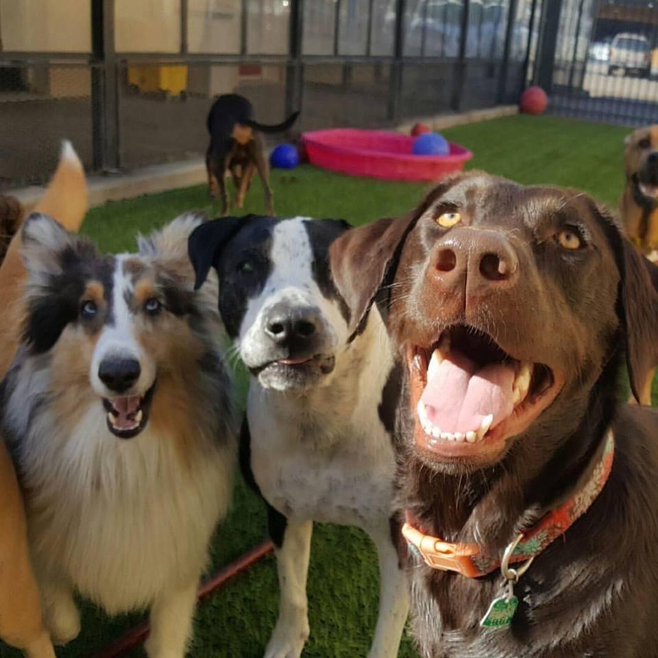 Fullsize Of Houston Pets Alive