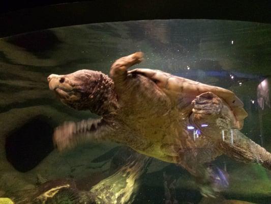 Oklahoma Aquarium   Aquariums   Jenks, OK   Reviews   Photos   Yelp