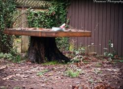 Magnificent Tree Stump Wood Table Tree Stump Ideas That Will Blow You Away Bob Vila Tree Stump Table Base Tree Stump Table Chairs