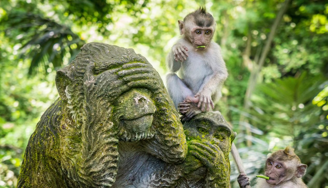 Fullsize Of Jungle Friends Primate Sanctuary