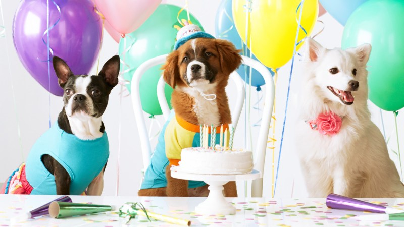 Large Of Dog Birthday Party
