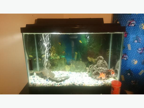 20 gallon fish tank gravel 20 gallon tank comes with for Best 10 gallon fish tank filter